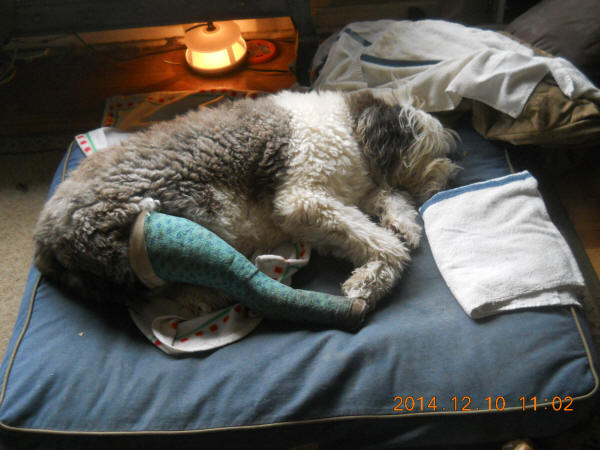 Mop on bed with splint
